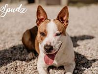 Spudz's story We have a handsome and friendly guy to