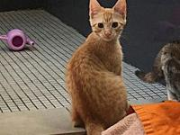 SPUNK's story Spunk is a very loving and playful kitty!