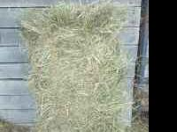 Fescue and Bermuda mixed hay horse quality nice large