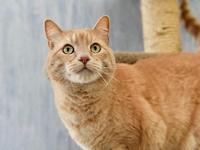 Squash's story Squash is a big and beautiful buff tabby