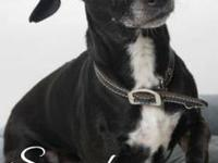 Squeak aka Smokey's story My name is squeak! I am an