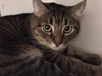 Squeaker's story Meet Squeaker! This pretty lady is a 3