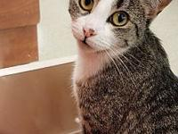 Squeakers's story Very friendly! Come meet Squeakers at