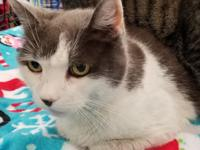Squeeky is a sweet and loving 7 yr old who adores