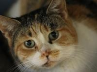Hi my name is  Squeeky! I am a 1 year old calico female