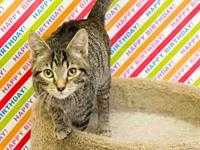 Squeeky's story   Adoption fee for cats is $65.00