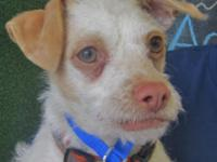 Hey! My name is Squiggy ... a rescue conserved me from