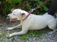 I have a male staffordshire terrier pup looking for a