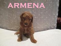 "Meet ""Armena"". A beautiful yet smaller little girl who"