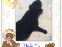 I have 7 common poodle young puppies that were born on