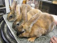 I have 5 standard rex bunnies looking for new homes.