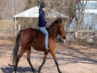 Standardbred - Breezy (bree) - Large - Young - Female -