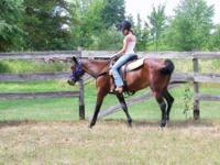 Standardbred - Gretchen - Medium - Senior - Female -