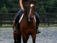 Standardbred - Hiccup - Medium - Adult - Male - Horse