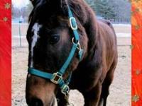 Standardbred - Phoenix - Medium - Adult - Male - Horse