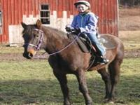 Standardbred - Hank - Small - Senior - Male - Horse