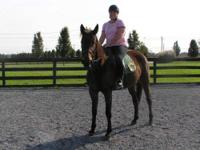 Standardbred - Munchie - Large - Adult - Female -