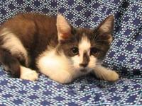 Stanley's story 18-C07-008 Stanley Breed: DSH Mix Size: