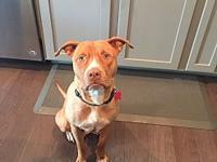 Star's story Star is a 2 year old mixed breed rescued