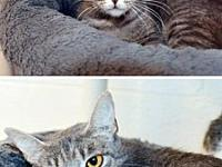 Star's story Star is an affectionate and outgoing 2