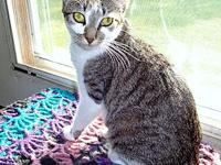 Star's story STAR: Very small tabby and white spayed