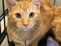 My story Star is one of 4 sweet orange boys saved from