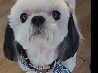 Star's story Meet Star, a beautiful 7 year old Shih Tzu