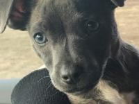 Star is a 9 week old cutie.  She may be small but has a