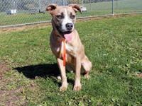 STAR's story Star knows sit and stay and loves to play