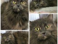 Starfire is a positively gorgeous longhaired lady of