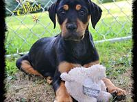 Stars's story Stars is a 8 week old, female