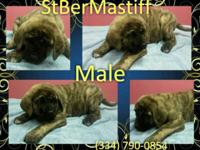 10 weeks old, vaccinated, dewormed numerous times,