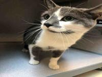 STEEL's story Hi my name is Steel! I can be shy at