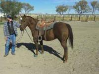 Fourteen year old gelding. Steer Wrestling Horse.