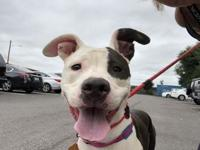 Stella's story !!! Located at ACCT Philly, 111 W