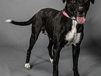 My story My name is Stella. I'm a 44lb female Lab mix.