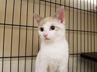 STERLING's story WAIT UNTIL YOU HEAR HIM PURR!