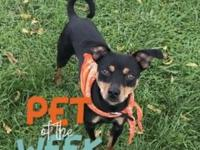 Sterling's story NEWS! Being Pet of the Week is a