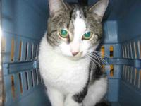 STEVE's story Hi my name is Steve! I am a handsome and