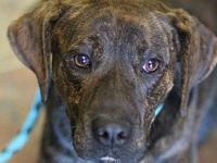STEVIE's story MEET STEVIE! A 1-2 year old, male,