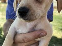 Stevie's story Stevie is a 9 week old mixed breed! This