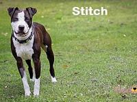 Stitch's story You can fill out an adoption application