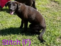 Stitch is a 5 to 6 month old puppy who will be joining