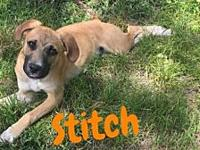 Stitch's story Please understand we must conduct home