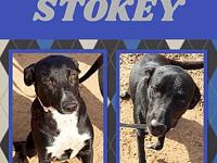 Stokey's story Stokey is a 1 year old Catahoula-Husky