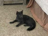 Stoney's story Stoney came to us as a feral kitten. He