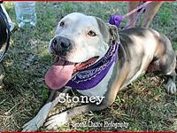 Stoney's story Stoney is crate trained as well as house