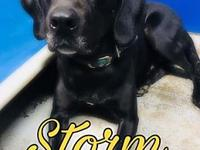 Storm's story Storm is great dog who absolutely loves