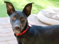 Stormie is looking for her fur-ever family! She is