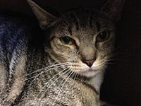 Stormy's story Stormy is a rescued feral cat. She